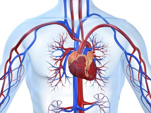 Причины боли в сердце после алкоголя